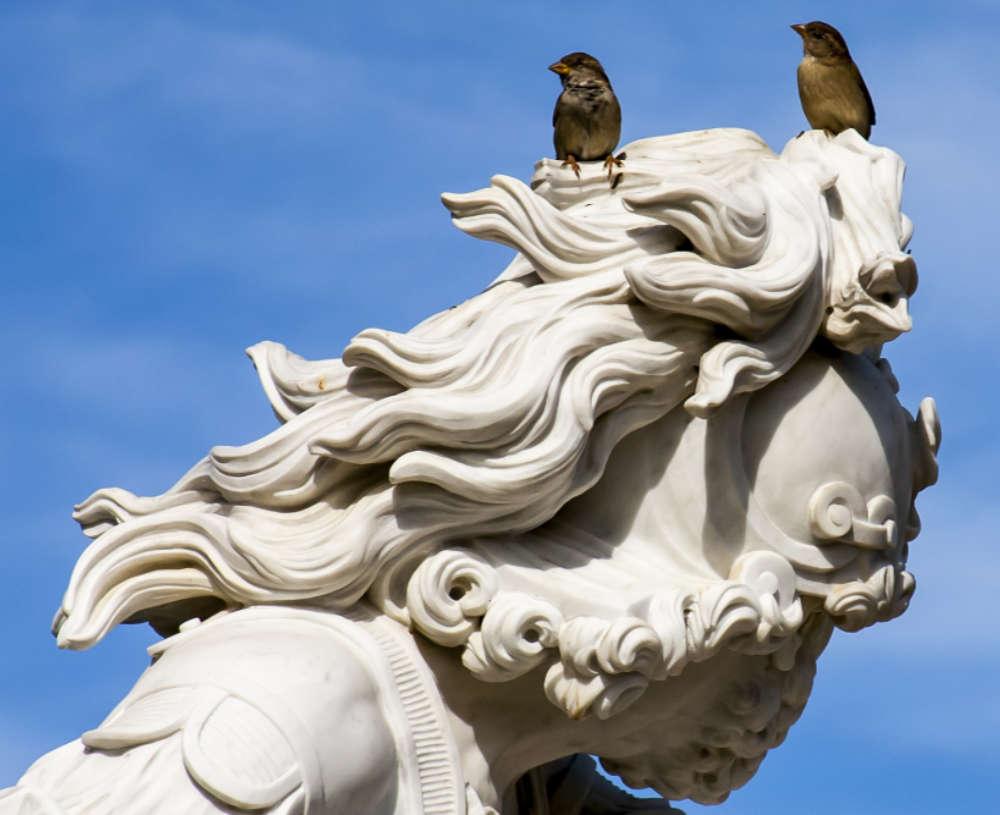 Spatzen Brautpaar auf Statue Potsdam - Copyright Guenter Rohe Pixabay
